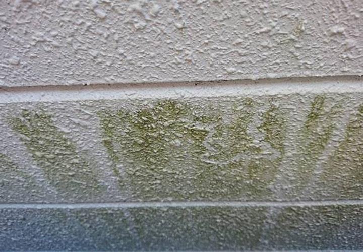 藻が目立つサイディング外壁
