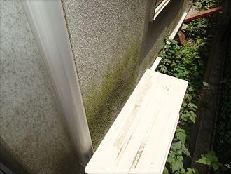 室外機の裏側の苔