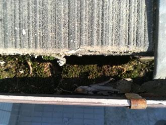 雨樋には汚れが溜まっていました