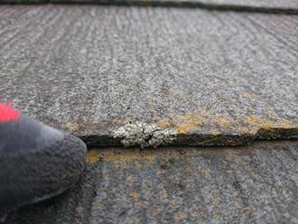 スレートの小口に発生した藻とカビ