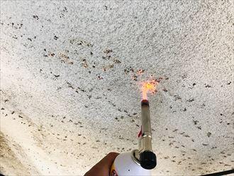 ツタの跡を焼く