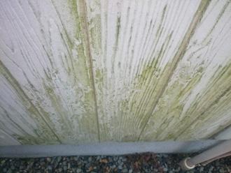 北側外壁は藻の繁殖が顕著