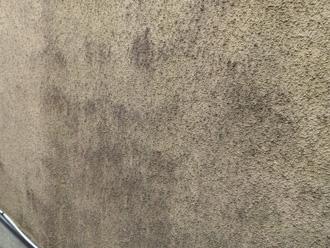 モルタル外壁にカビが繁殖