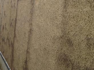 外壁にカビが繁殖