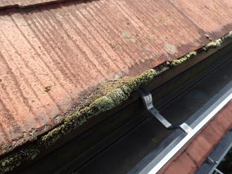 屋根の下端の苔