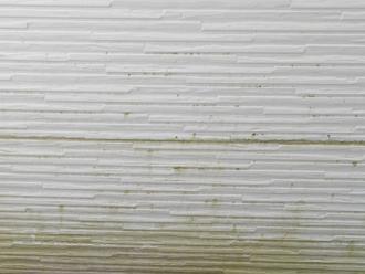 窯業サイディング外壁に苔