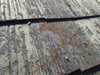 塗膜が剥離し苔が繁殖