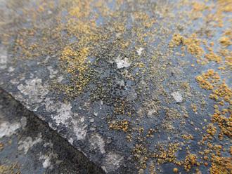 塗膜の劣化により苔が繁殖