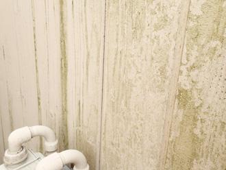 塗膜の劣化により藻が繁殖