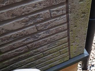 外壁に藻が繁殖
