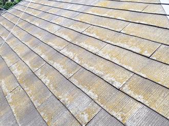 広範囲に苔が繁殖したスレート屋根