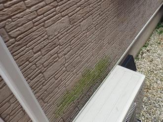 室外機の裏の苔