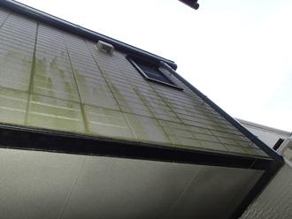 北側外壁に藻が繁殖
