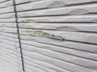 台風で損傷し藻が繁殖した外壁