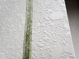 藻が繁殖したシーリング