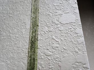 シーリングの劣化により藻が繁殖