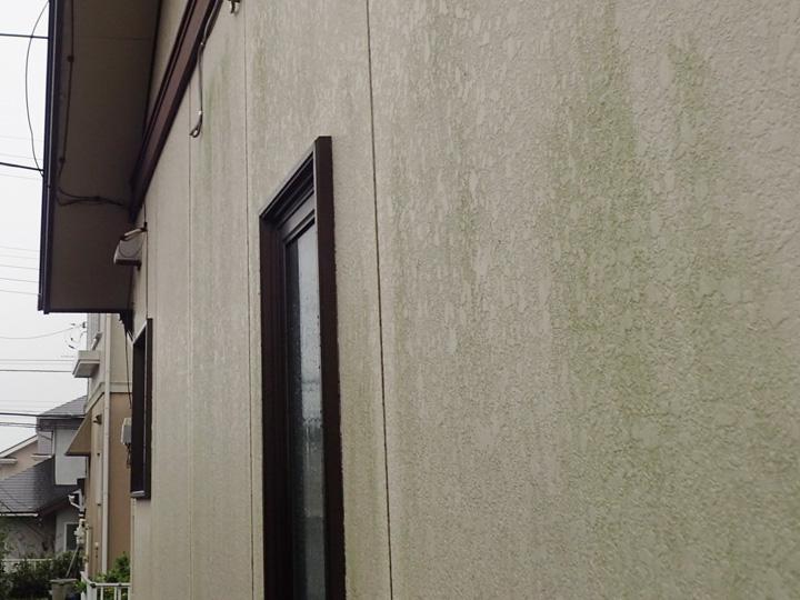 外壁に繁殖した藻