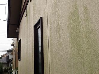 藻が繁殖した外壁