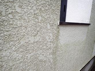 カビや藻が繁殖した外壁