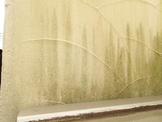 塗膜劣化により藻が繁殖