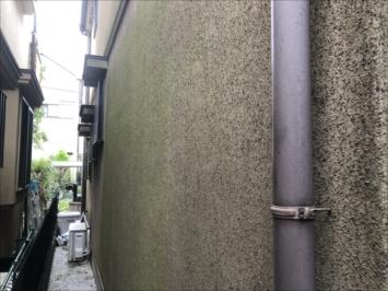 藻の生えたモルタル外壁