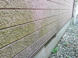 モルタル外壁には藻が発生しています
