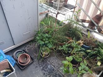 バルコニーの植物と置物
